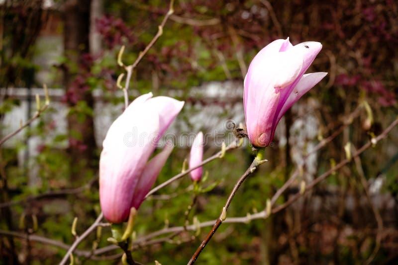 Wiosna goniec fotografia stock