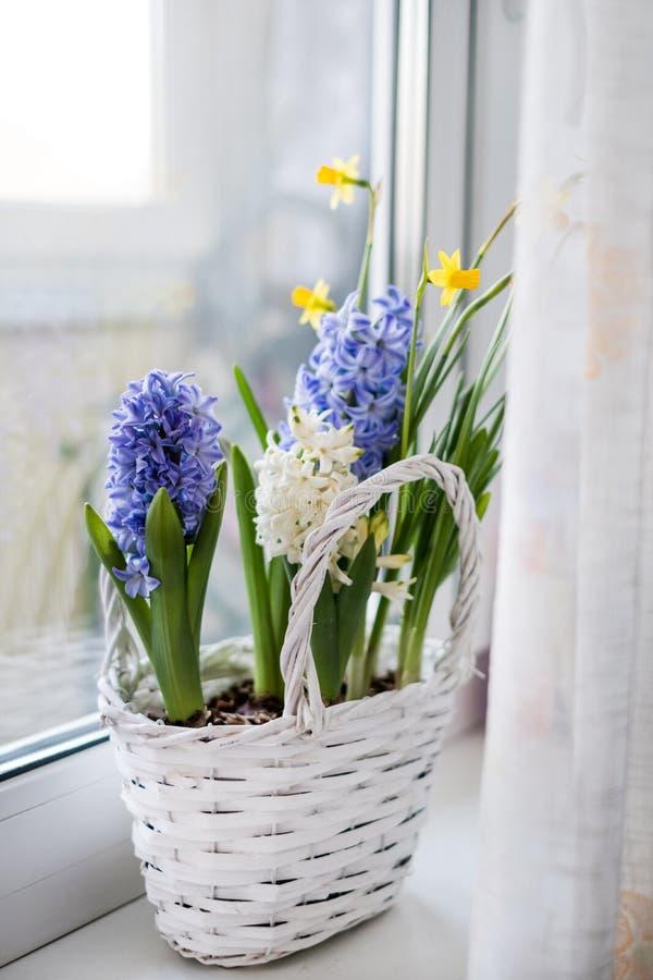 Wiosna hiacyntu kwiaty zdjęcie stock