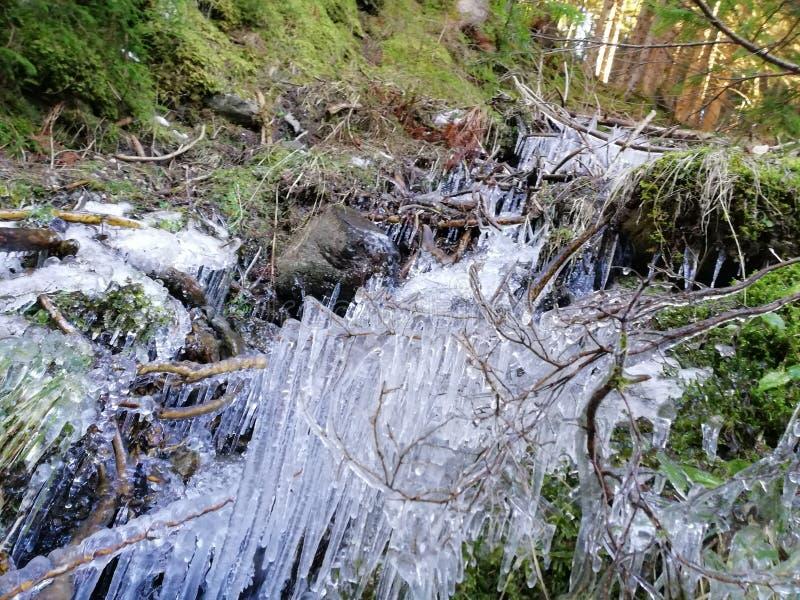 Wiosna i lód fotografia stock