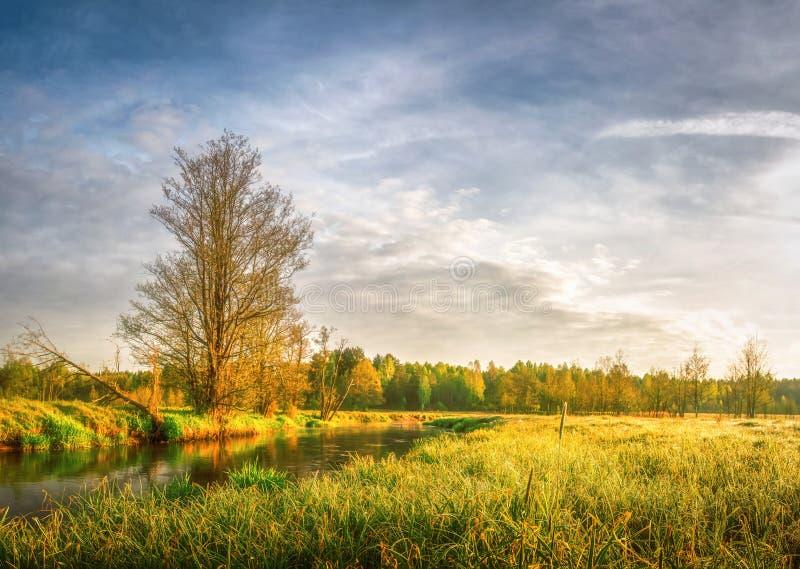 Wiosna jaskrawy krajobraz łąka i sceneria brzeg rzeka z drzewami i zieloną trawą Wiejska naturalna scena w kontekście niebieskie  zdjęcie stock