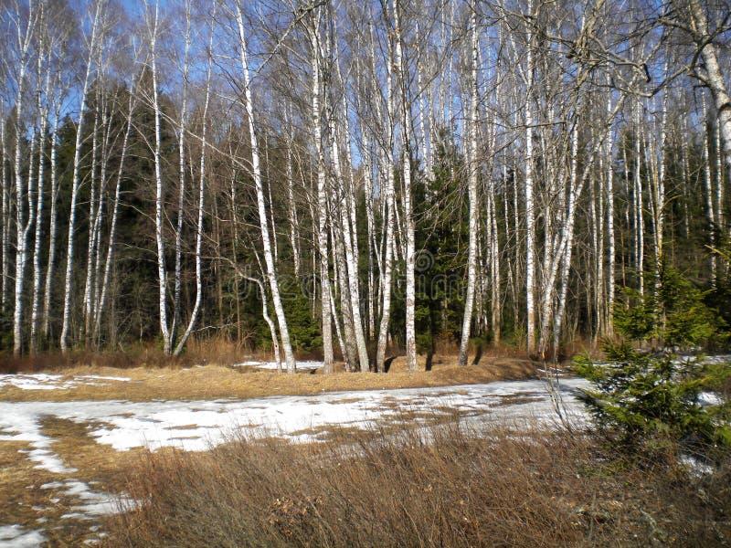 Wiosna jasnego ciepły dzień w drewnach obrazy royalty free