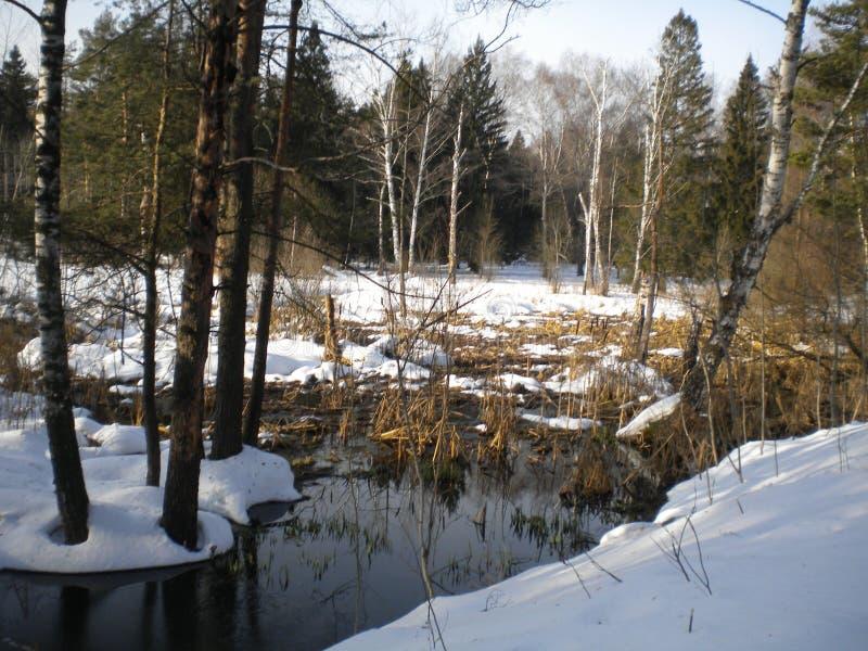 Wiosna jasnego ciepły dzień w drewnach zdjęcie royalty free