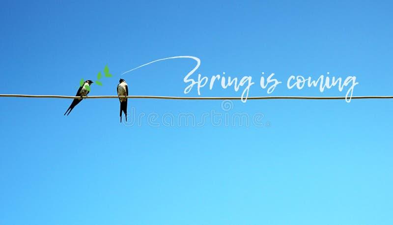 Wiosna jest nadchodzącym pojęciem Dwa dymówek obsiadanie na drucie w jeden gałąź w belfrze inni tweets - wiosna komes śliczny ład zdjęcia royalty free