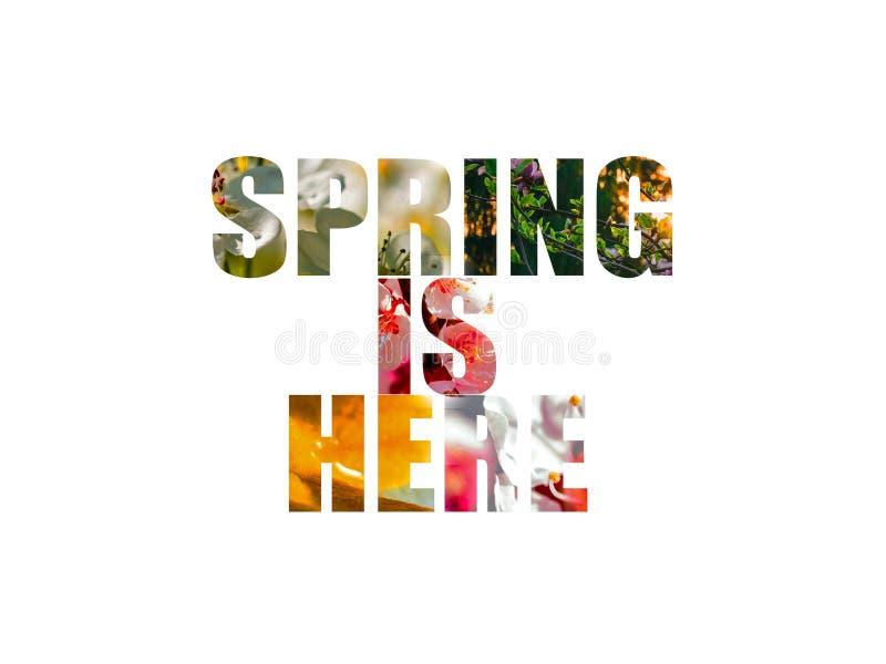 Wiosna jest tutaj s?owa z r??owymi i bia?ymi kwiatami w tle odizolowywaj?cym royalty ilustracja