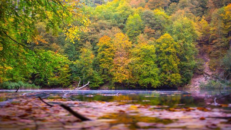 Wiosna jezioro w drewnach zdjęcia stock