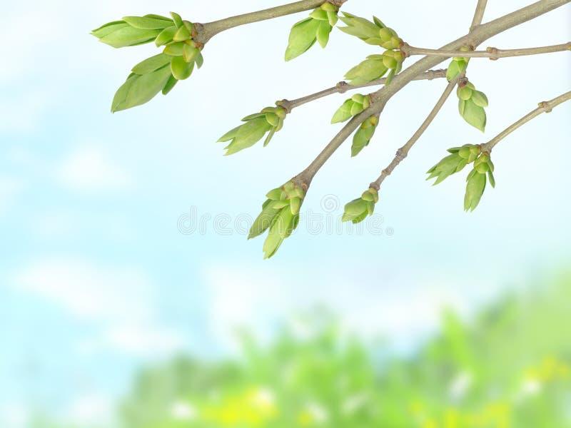 wiosna kapuje potomstwa obraz royalty free
