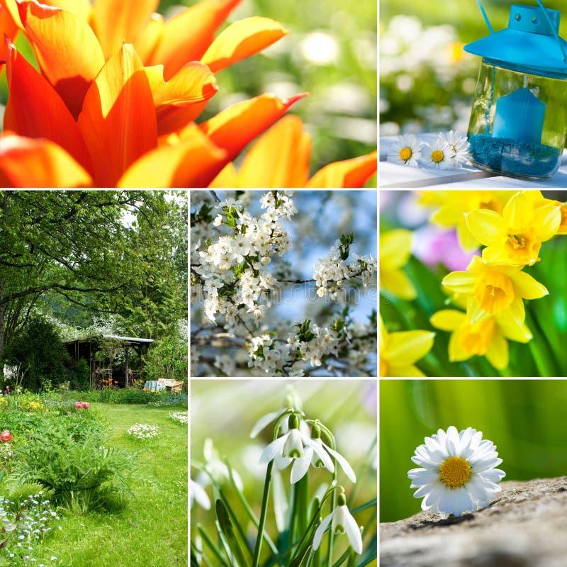 Wiosna kolaż zdjęcie royalty free