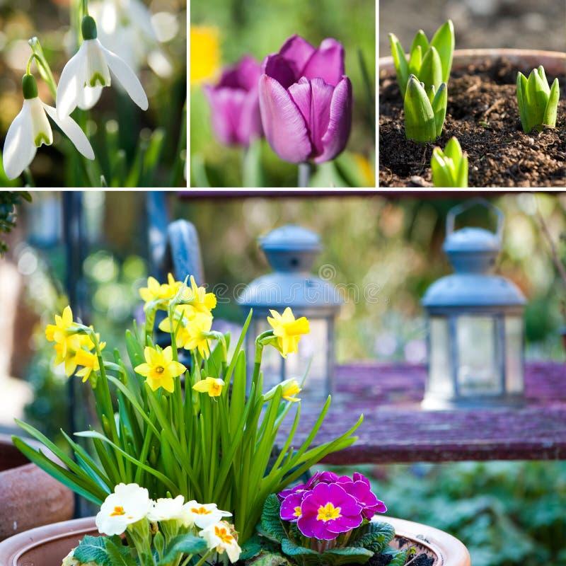 Wiosna kolaż fotografia royalty free