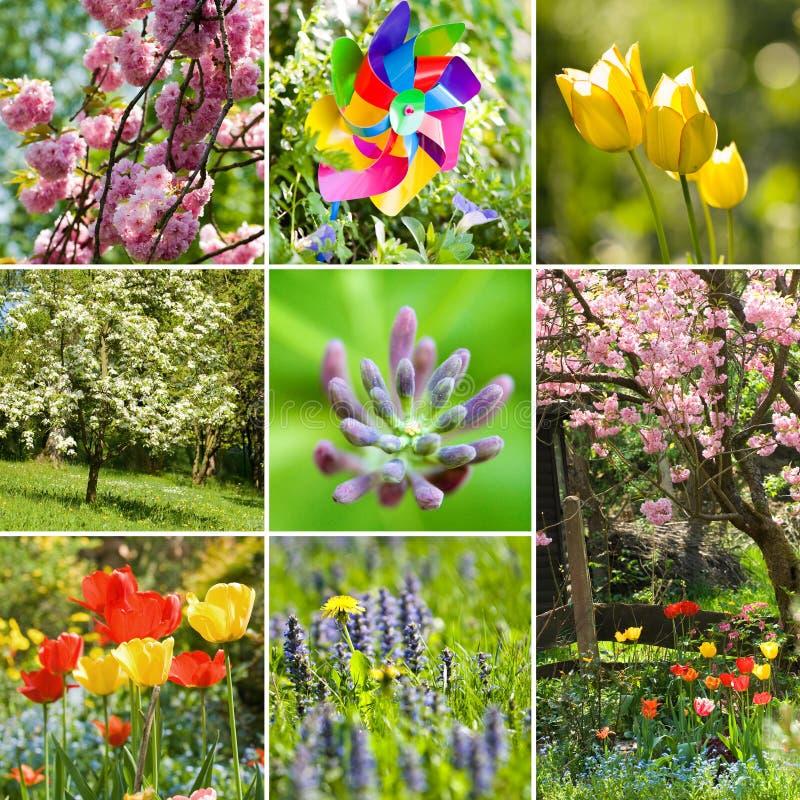 Wiosna kolaż zdjęcia stock