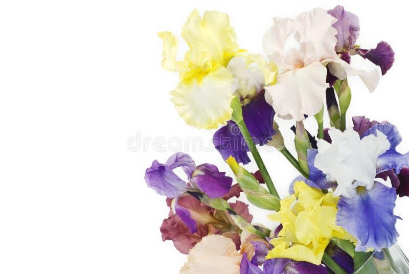 Wiosna kolorowi Irysy zdjęcie stock