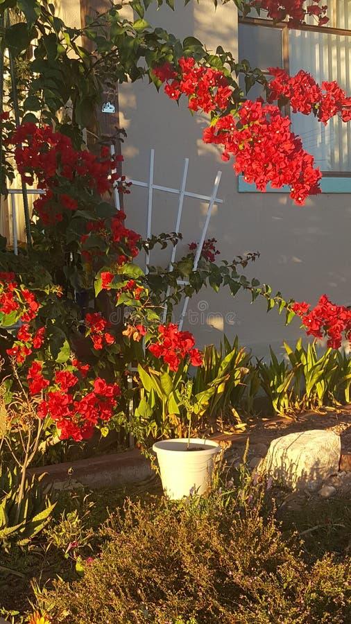 Wiosna kolory w spadku fotografia stock