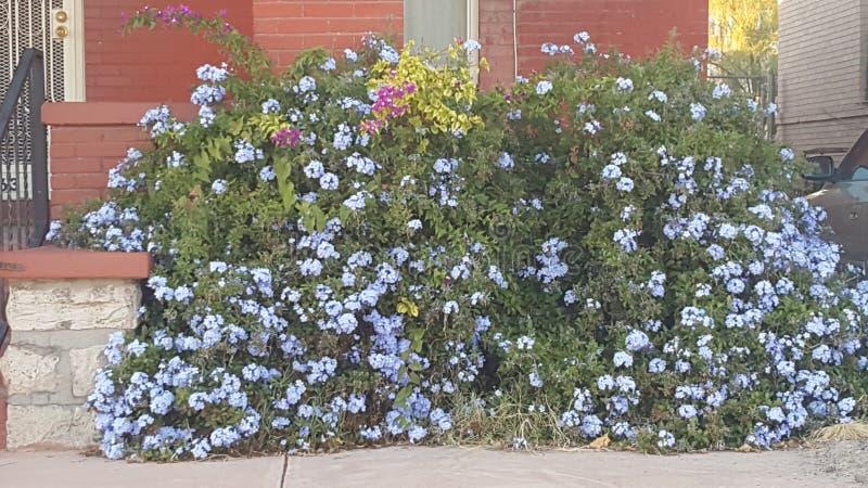 Wiosna kolory w spadku zdjęcia stock