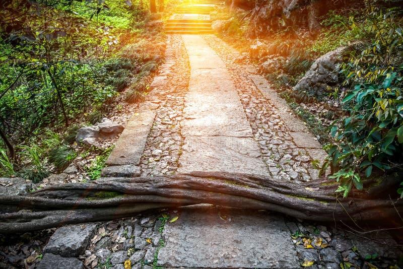 Wiosna krajobraz ścieżka foluje przeszkody Tam są drzewa przed korytarzem, Ale sposób naprzód także nadzieję i zdjęcie stock