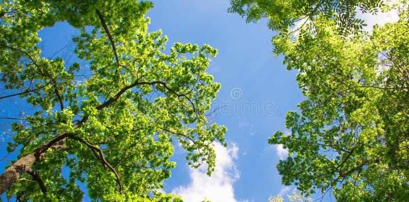 Wiosna krajobraz drzewa obrazy stock
