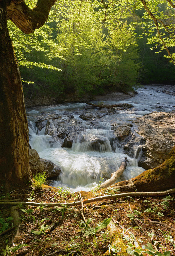 Wiosna krajobraz halna rzeka z małą siklawą nad skałami obraz stock