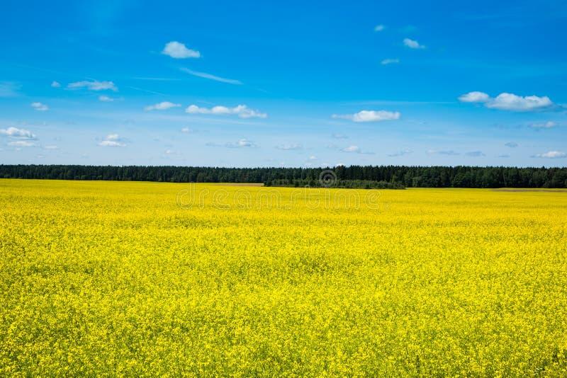 Wiosna krajobraz, las i koloru żółtego pole, fotografia stock