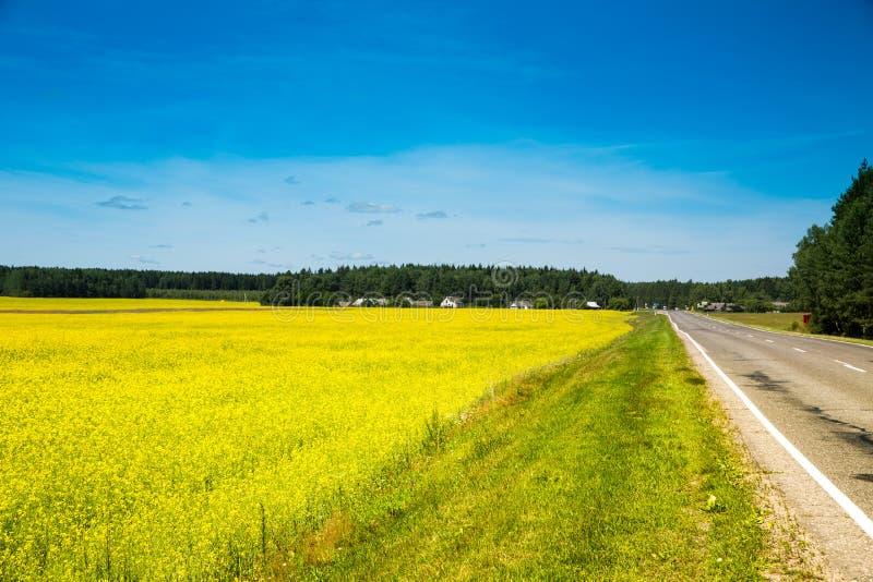 Wiosna krajobraz, las i koloru żółtego pole, zdjęcia stock