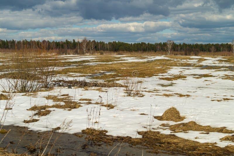 Wiosna krajobraz ostatni śnieg w ustronnych miejscach Deciduous drzewa bez liści Topi wodę od śniegu zdjęcia royalty free