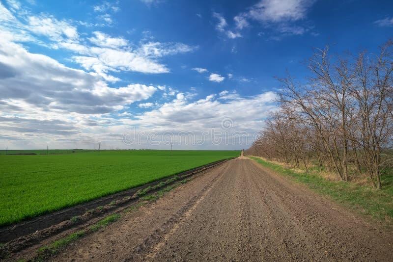 Wiosna krajobraz z drogą, drzewami i zielonym polem Niebieskie mętne niebo obrazy royalty free
