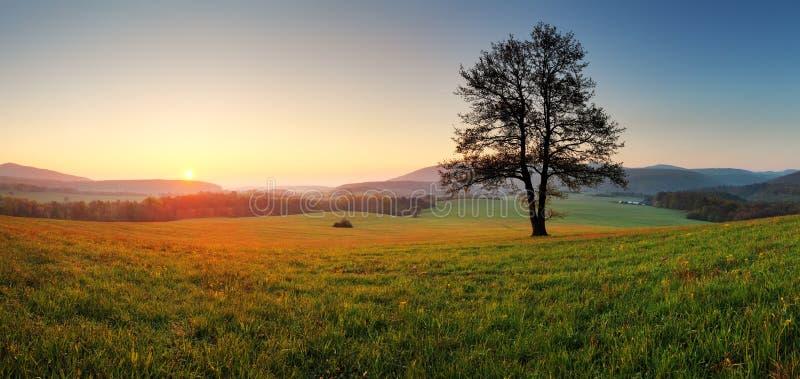 Wiosna krajobraz z drzewem i słońcem fotografia stock
