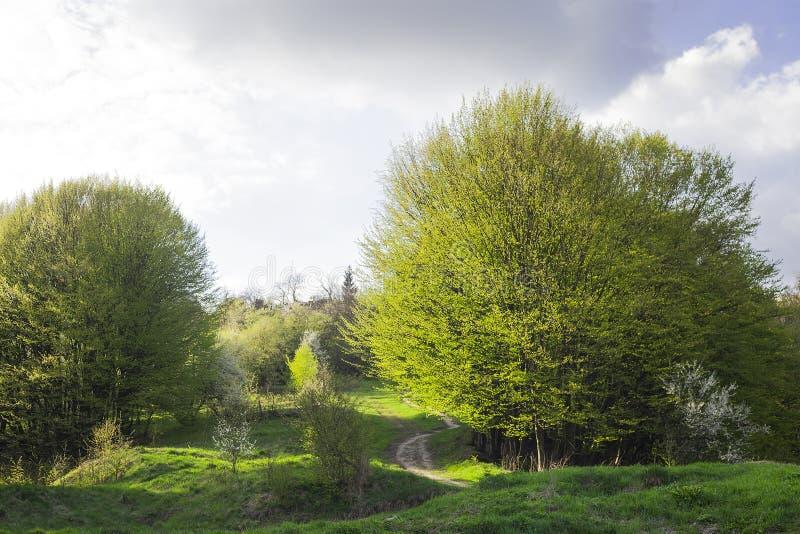 Wiosna krajobraz z footpath w zielonej trawie blisko mgłowego lasu obraz royalty free