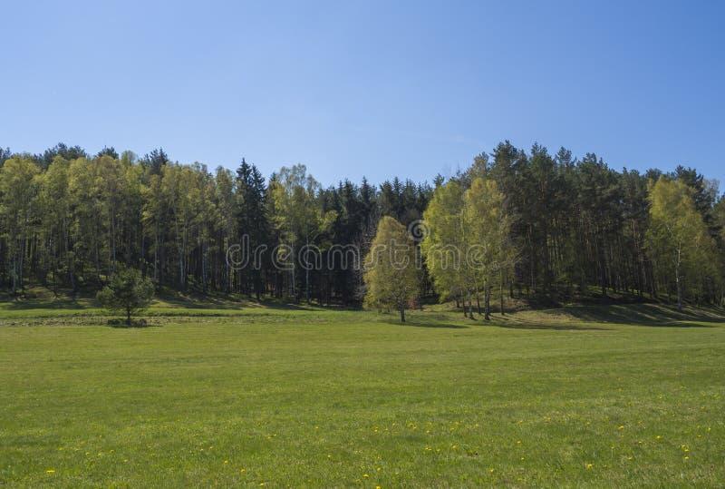 Wiosna krajobraz z luksusow? zielonej trawy ??k? z lasem i jasnym niebieskim niebem brzozy i sosen Naturalny t?o obrazy royalty free