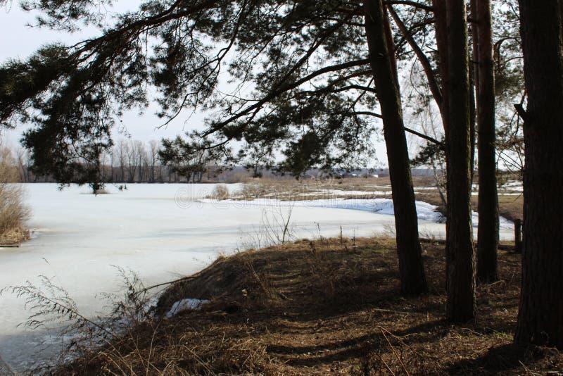 Wiosna krajobraz z rzeką zakrywającą z lodem i drzewami zdjęcia royalty free
