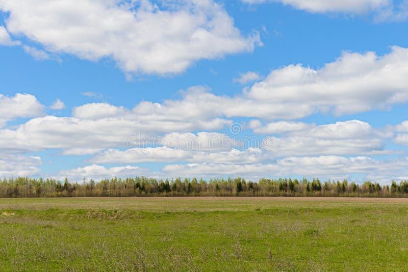 Wiosna krajobraz z zieleni polem, niebieskie niebo z chmurami i las, fotografia royalty free
