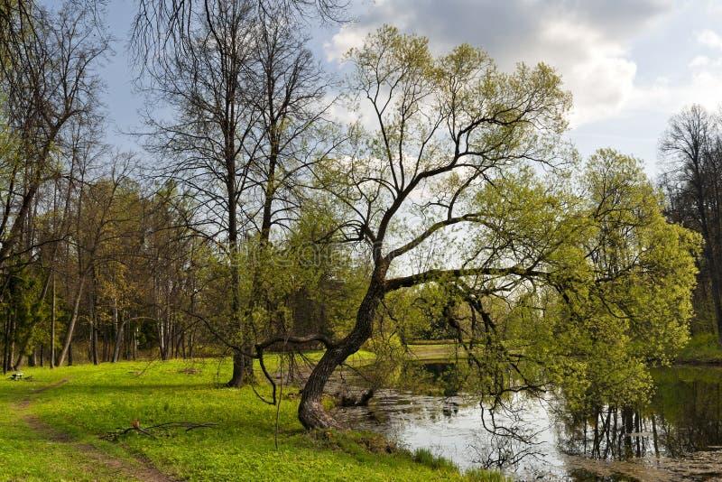 Wiosna kraju krajobraz zdjęcie stock