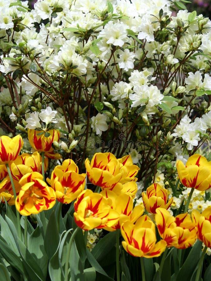 wiosna kwiat 1 ogrodu zdjęcie stock