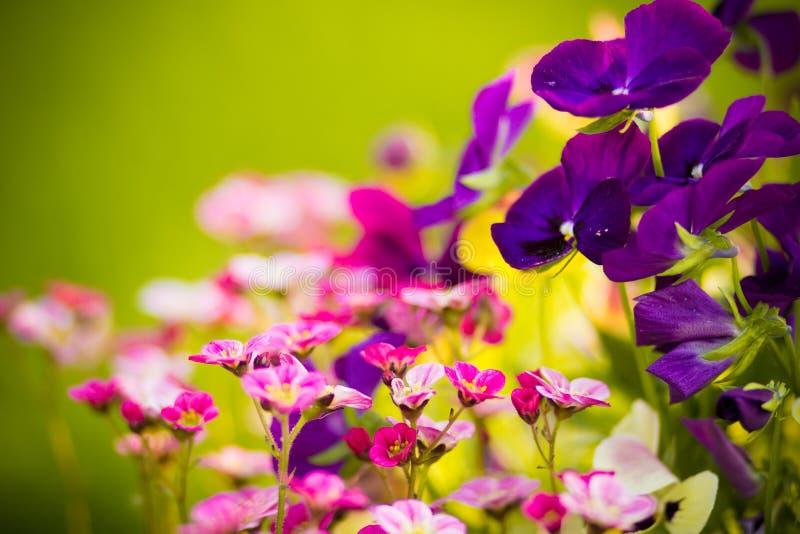 Download Wiosna kwiat obraz stock. Obraz złożonej z natura, fielder - 53789913