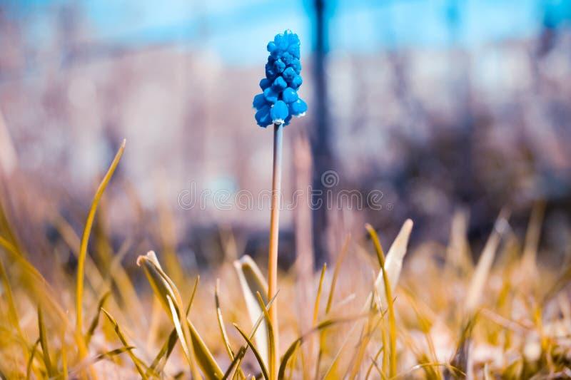Wiosna kwiatu fotografii skutka abstrakcja fotografia stock