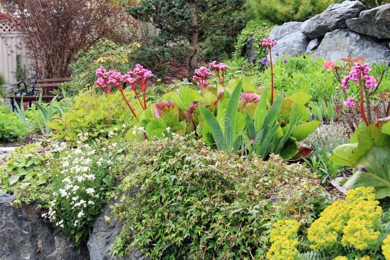 Wiosna kwiatu ogród obraz royalty free