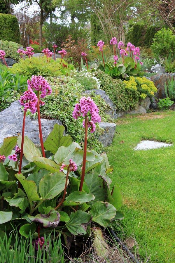 Wiosna kwiatu ogród fotografia stock