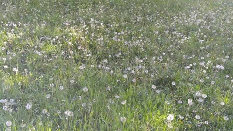 Wiosna kwiatu pola w górach Shaki fotografia royalty free