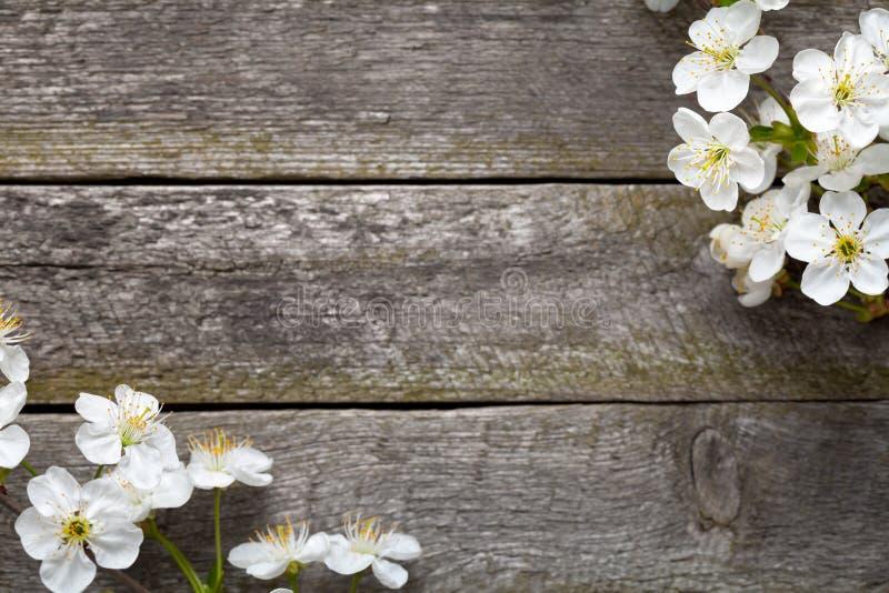 Wiosna kwiaty zdjęcie stock