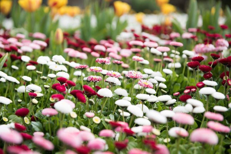 Download Wiosna kwiaty obraz stock. Obraz złożonej z kwiat, wiosna - 53788655
