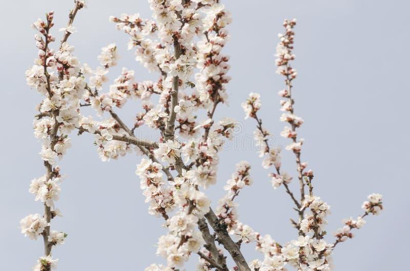 Wiosna kwiaty drzewo przeciw niebu obraz royalty free