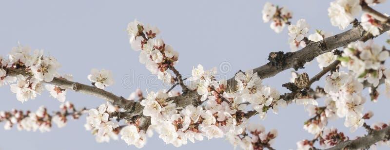 Wiosna kwiaty drzewo przeciw niebu zdjęcie royalty free