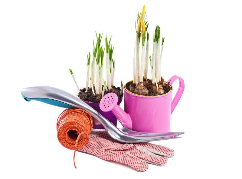 Wiosna kwiaty i ogrodowi narzędzia odizolowywający na bielu fotografia stock
