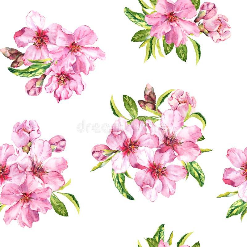 Wiosna kwiaty kwitną Sakura, wiśni lub jabłoni, bezszwowy kwiecisty wzoru Wodny kolor obrazy stock