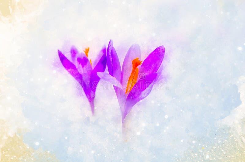 Wiosna kwiaty, szafran i delikatnie zamazany akwareli tło, ilustracja wektor