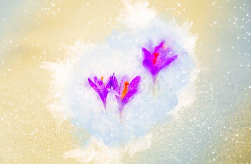 Wiosna kwiaty, szafran i delikatnie zamazany akwareli tło, royalty ilustracja