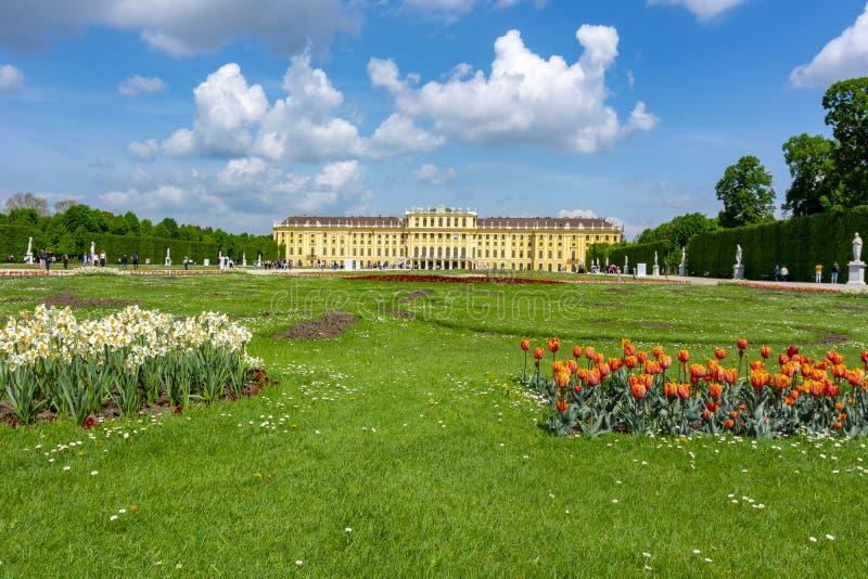 Wiosna kwiaty w Schonbrunn ogródzie, Wiedeń, Austria zdjęcia royalty free