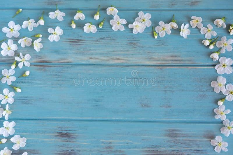 Wiosna kwiaty wi?nia na b??kitnym drewnianym tle z miejscem dla inskrypcji Projekt dla kartki z pozdrowieniami z czere?niowymi kw obraz royalty free
