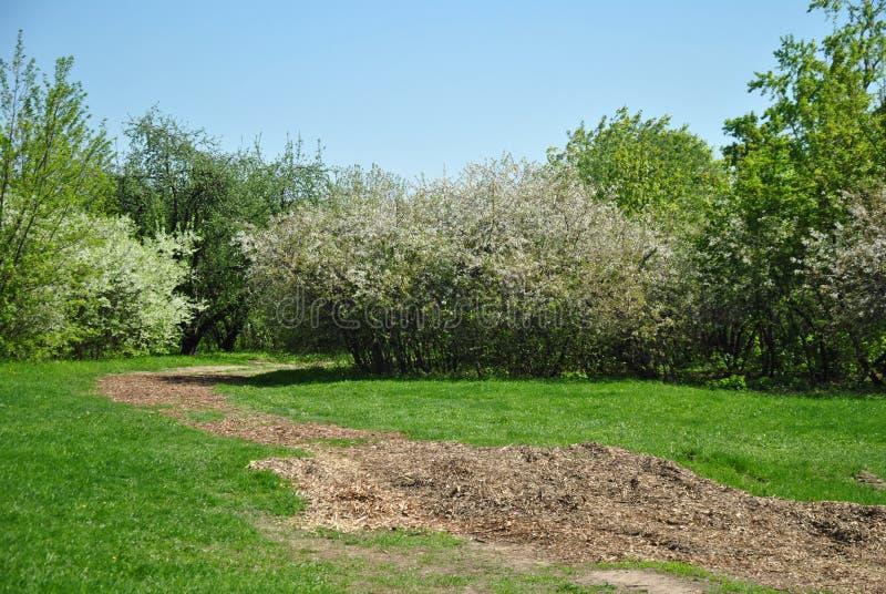 Wiosna kwitnący ogród zdjęcia royalty free