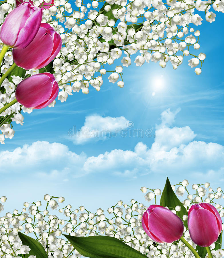 Wiosna kwitnie leluje obrazy stock