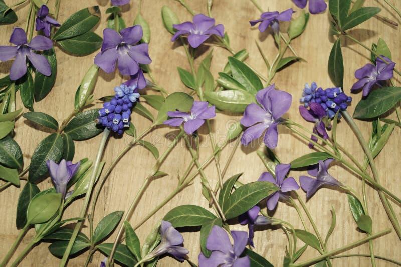 Wiosna kwitnie na drewnianym tle fotografia stock