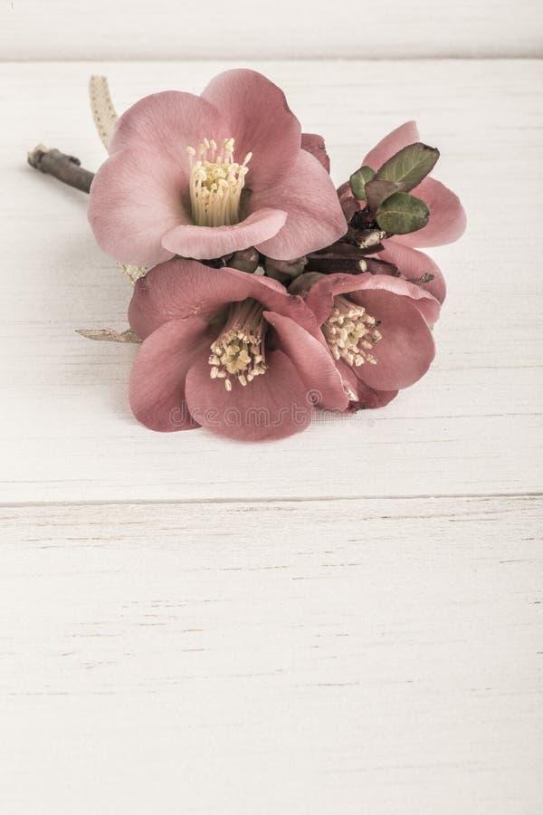 Wiosna kwitnie na drewnianym tle fotografia royalty free