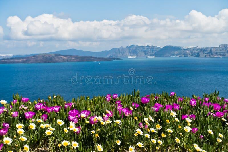 Wiosna kwitnie na kalderze przy pogodnym rankiem, Santorini wyspa zdjęcie royalty free